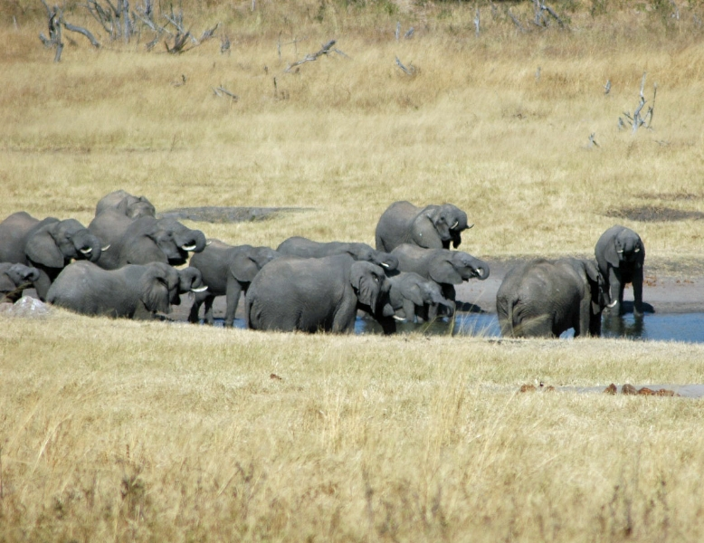 1-elephants-at-watering-hole